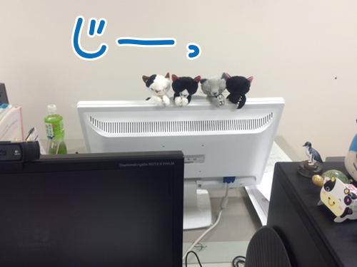 にゃんこ凝視.jpg