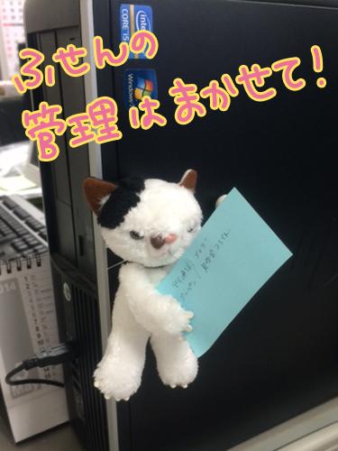 にゃんこ1.jpg