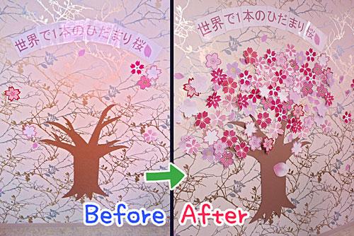 ひだまりカフェの桜①.jpg