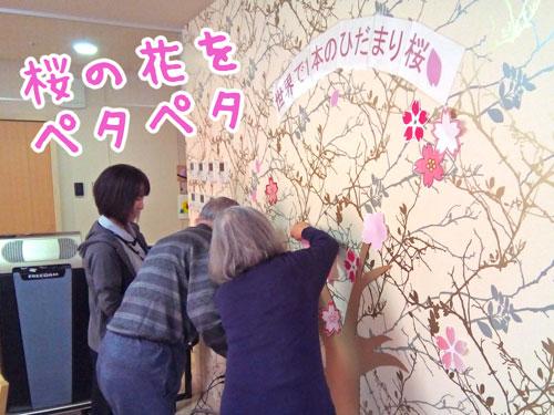 ひだまりカフェの桜②.jpg