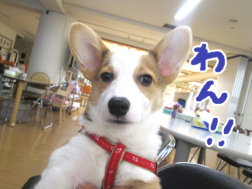 りんちゃん1.jpg