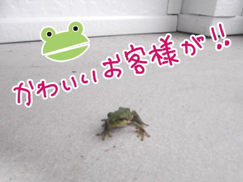 カエルjpg.jpg