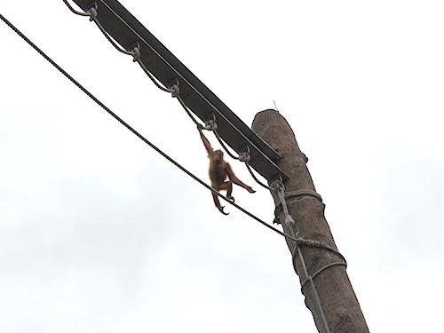 チンパンジー.JPG