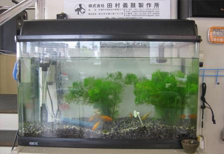 リハ金魚.jpg