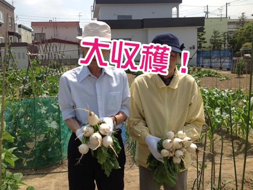 収穫風景1.jpg