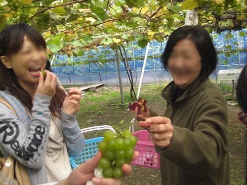 果物狩り2.jpg