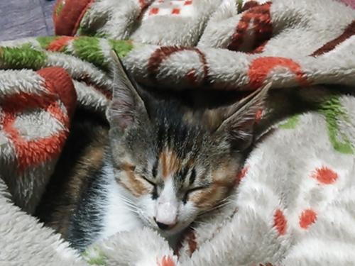 猫2.jpg