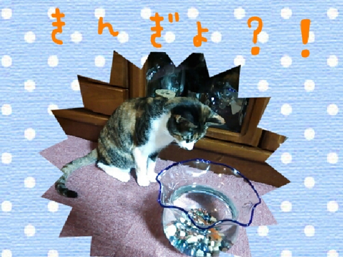 金魚とねこ.jpg